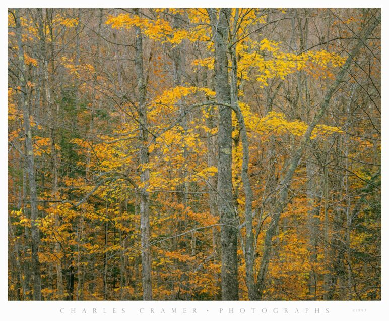 Hillside and Trees, Fall Color, White Mountains, New Hampshire