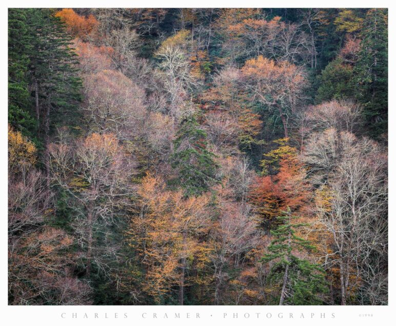 Late Fall, Bare Trees, Great Smoky Mountains