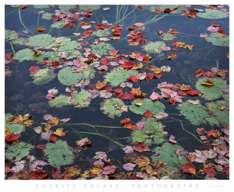 Long Pond, Red Leaves and Lillypads, Acadia, Maine