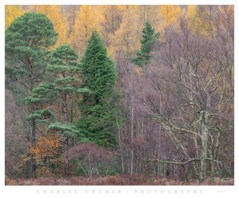 Trees, Fall, Derwentwater, Lakes District, England