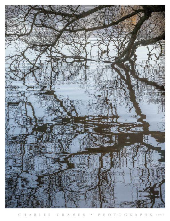 Partially Submerged Tree, Derwentwater, Lakes District, England
