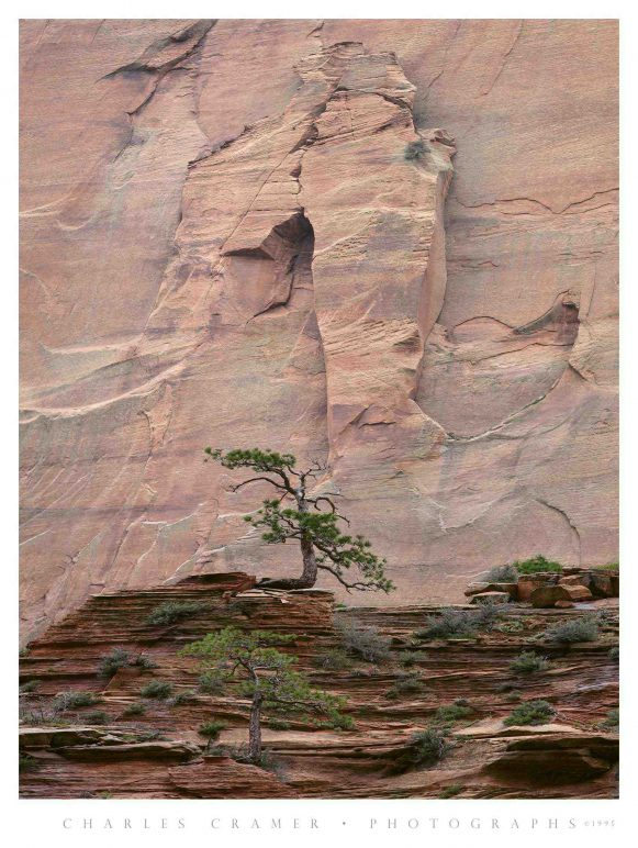 Pines, Emerging Arch, Kolob Canyon, Zion