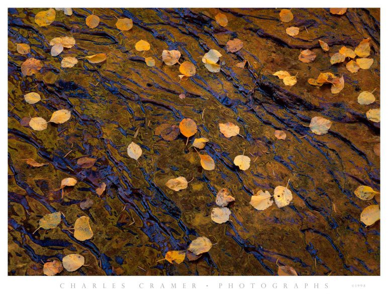 Leaves on Slickrock, North Creek, Autumn, Zion