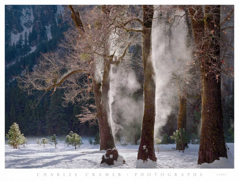 Mist Steaming from Oaks, Winter, Yosemite Valley