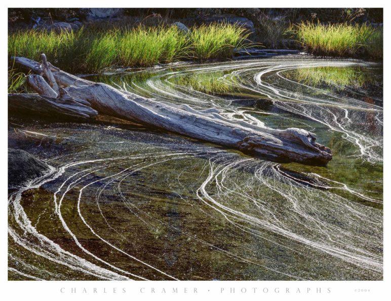 Backlit Grasses and Pollen Foam, Pond, Yosemite