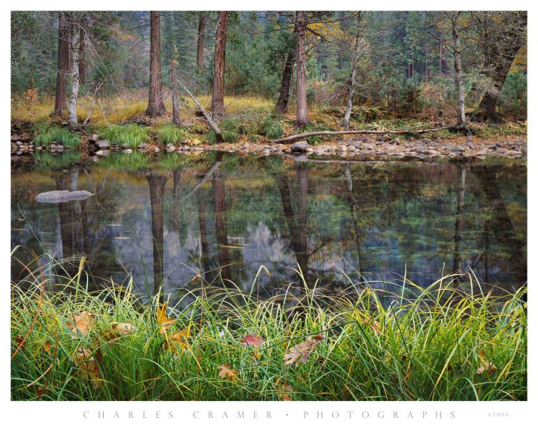 Grasses and Leaves, Fall, Merced River, Yosemite