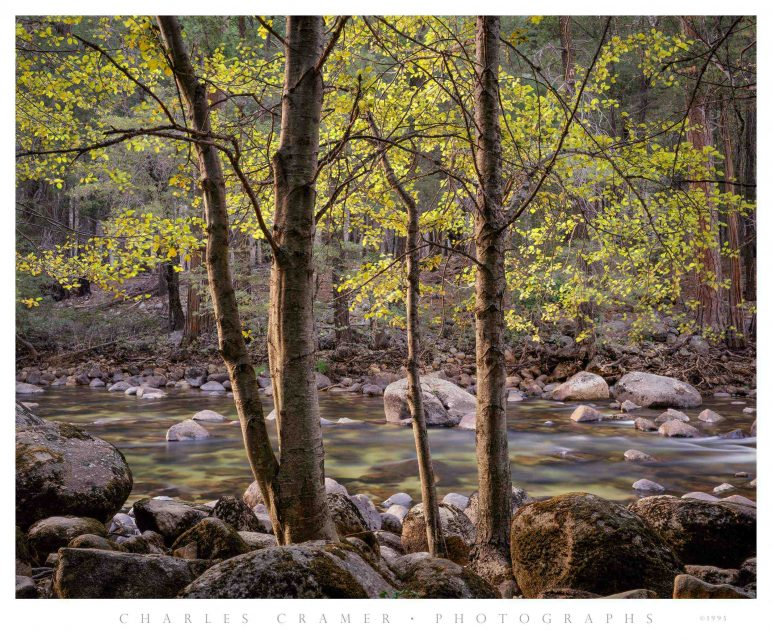 Trees and Rocks, Merced River, Yosemite