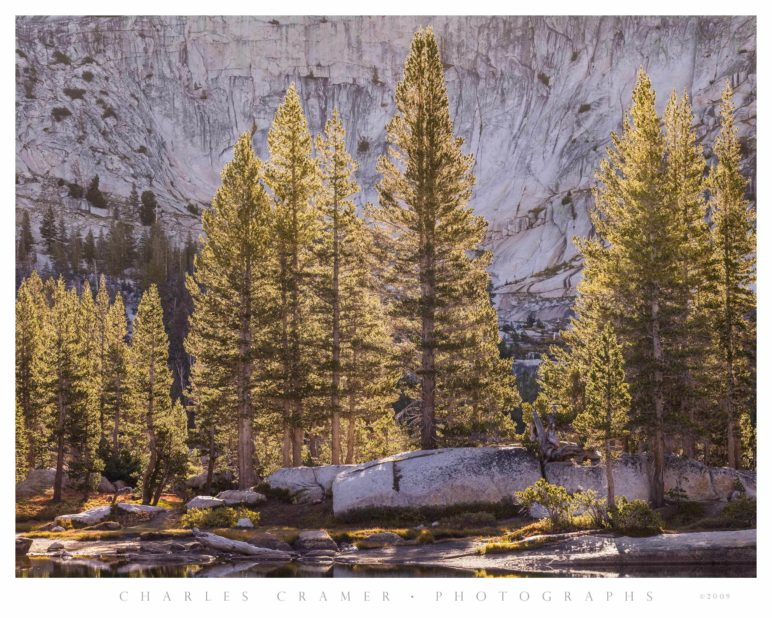 Backlit Trees, Cathedral Lake, Yosemite