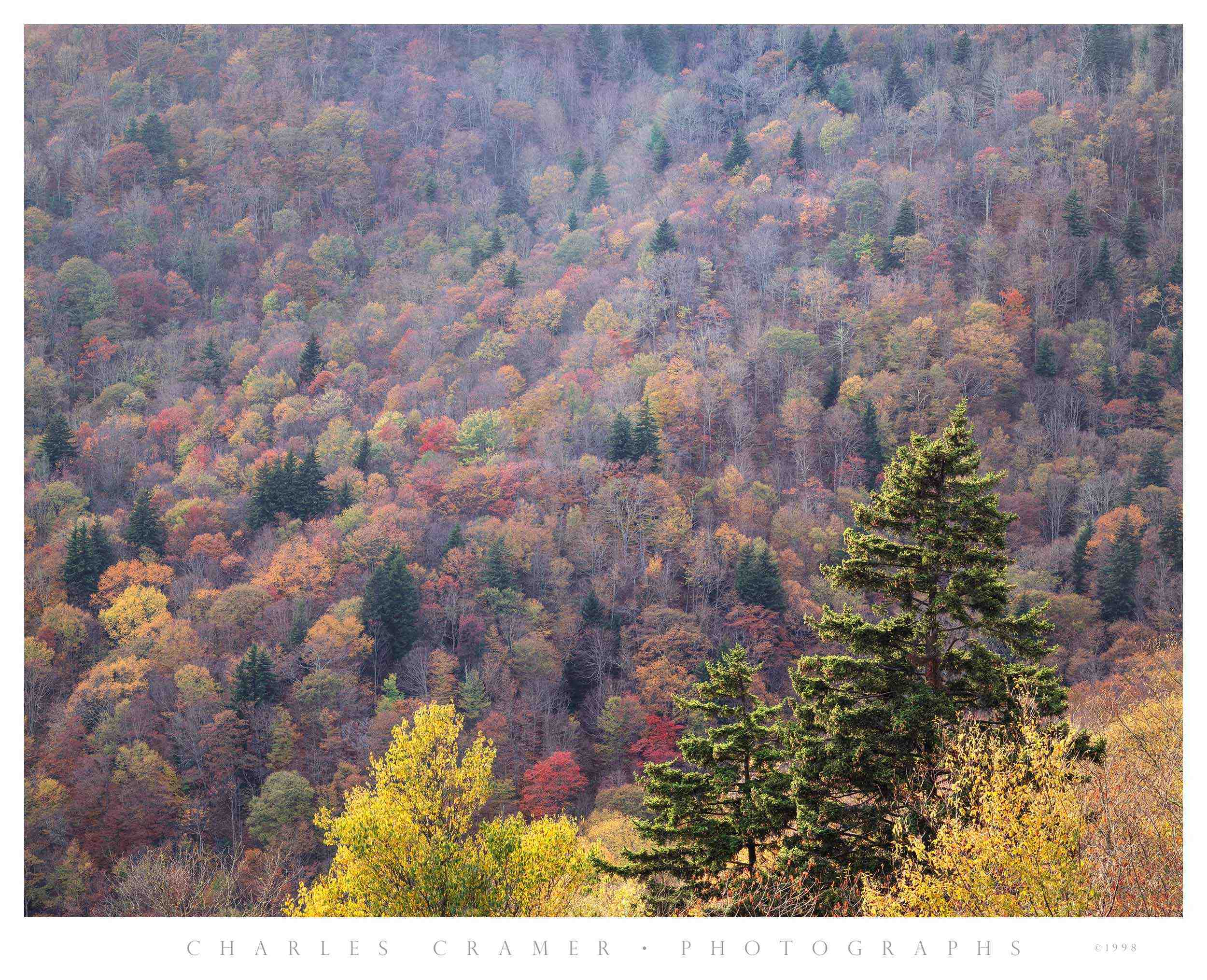 Hillside, Late Fall,  Blue Ridge Mountains