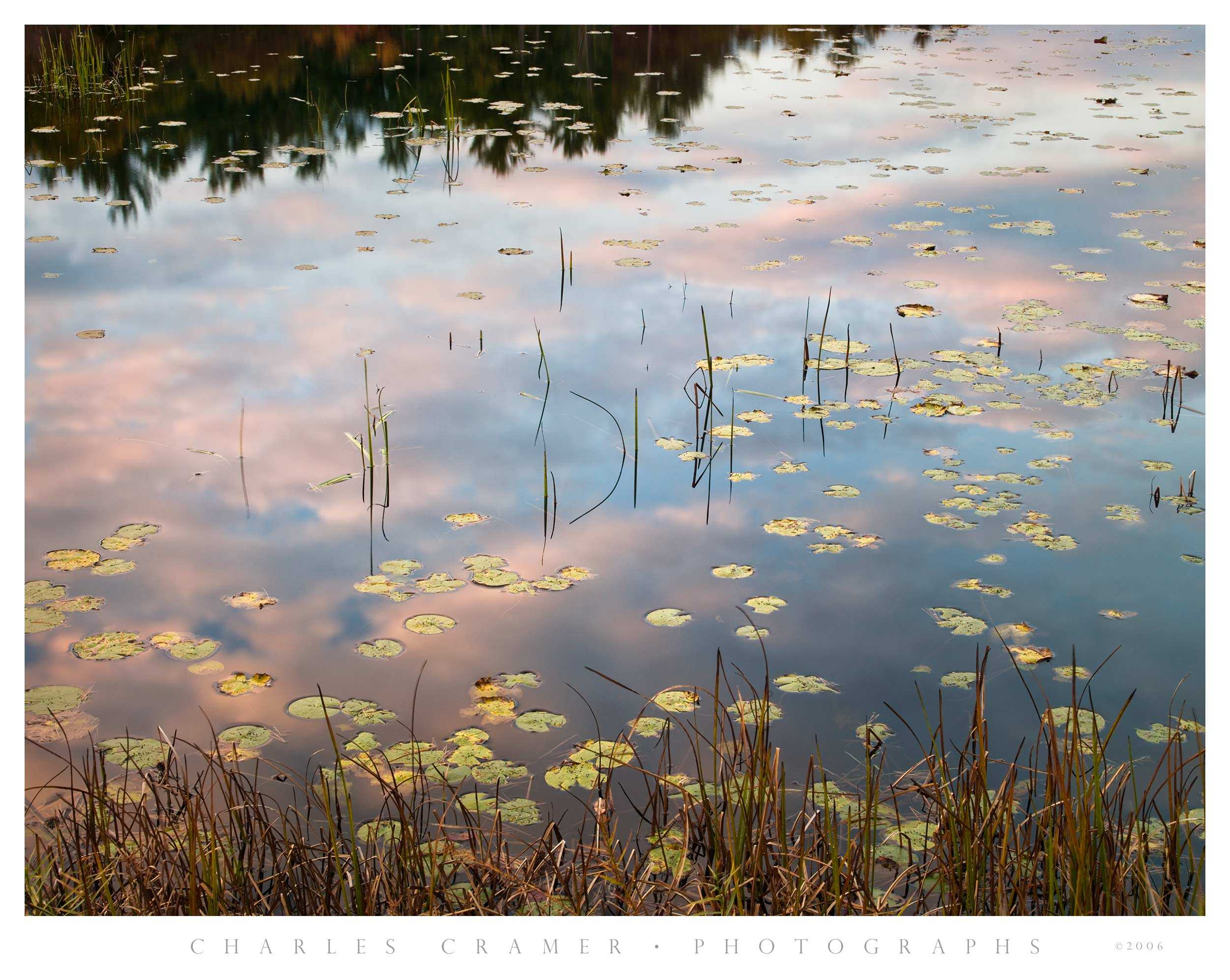 Lillypads, Pool, Sunset, New Hampshire