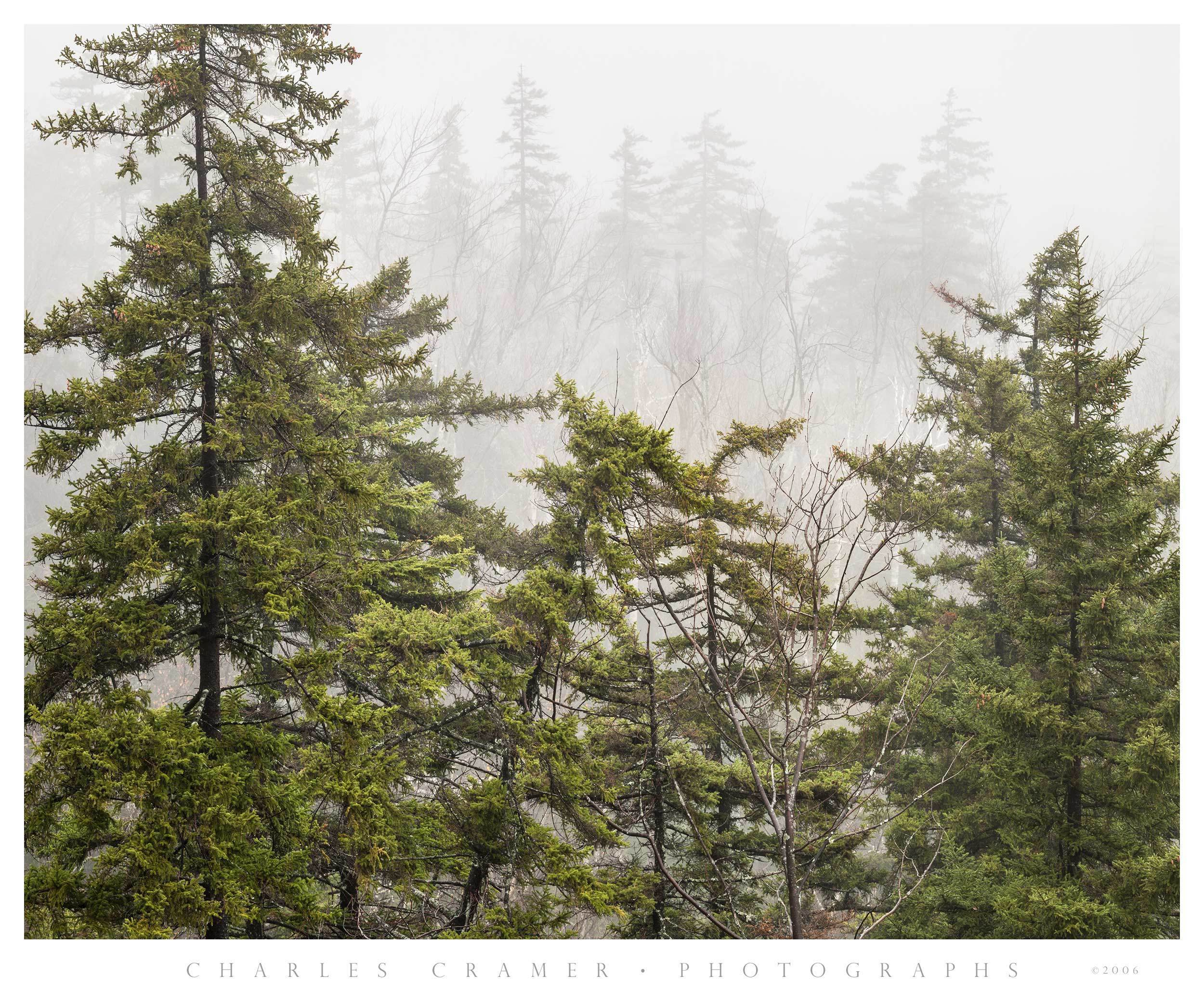 Fog, Near and Distant Trees, Green Mountains, Vermont