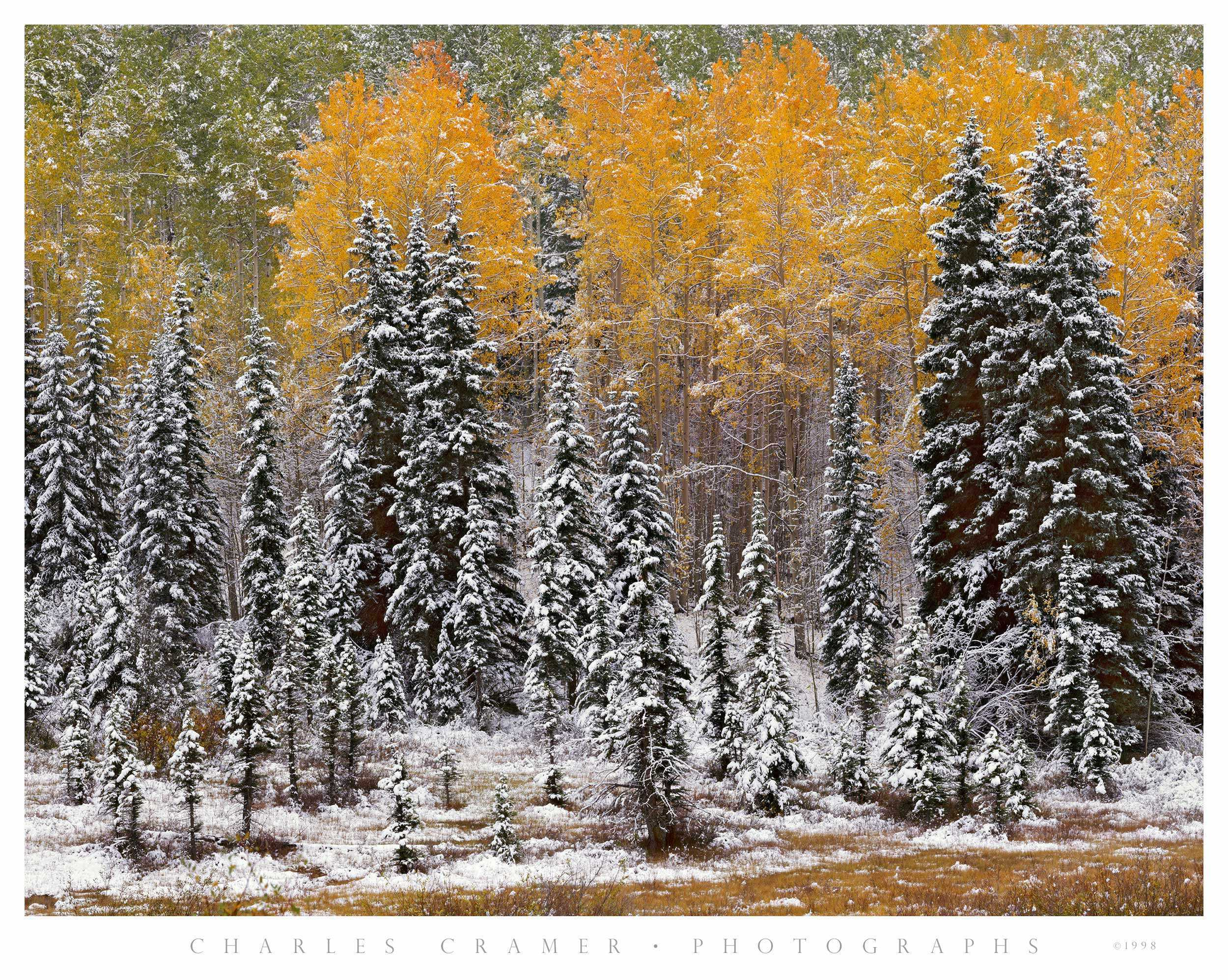 Autumn Snowfall, near Telluride, Colorado