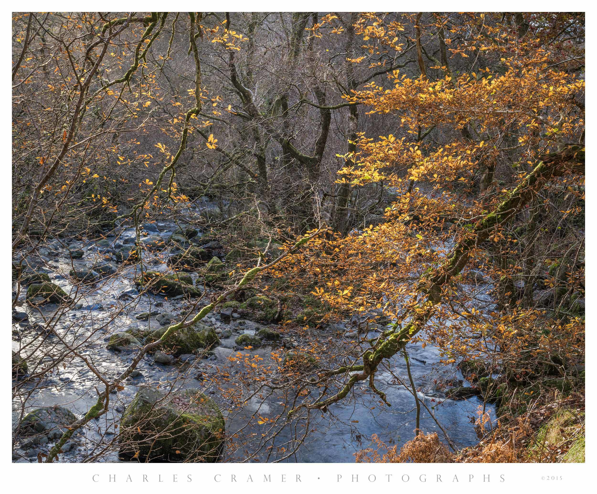 Backlit Branches, Aira Force, Ullswater, England
