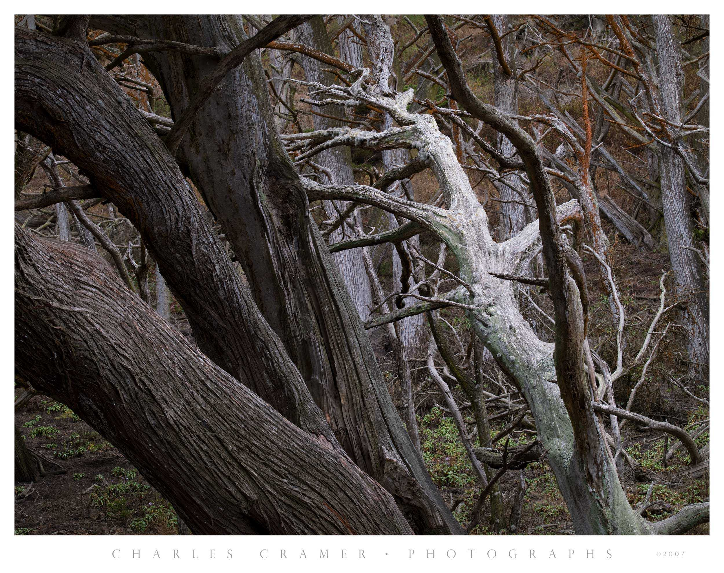 Cypress Forest, Point Lobos Reserve, California