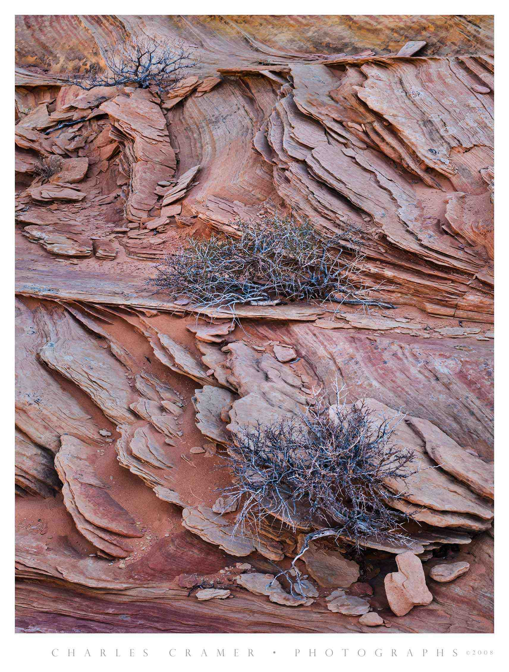 Shrubs and Ledges, White Pocket, Utah
