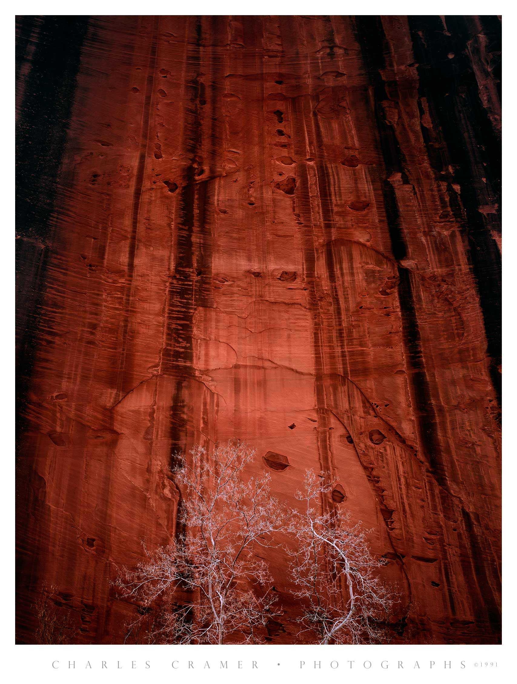 Trees, Rock Wall, Kolob Canyon, Zion