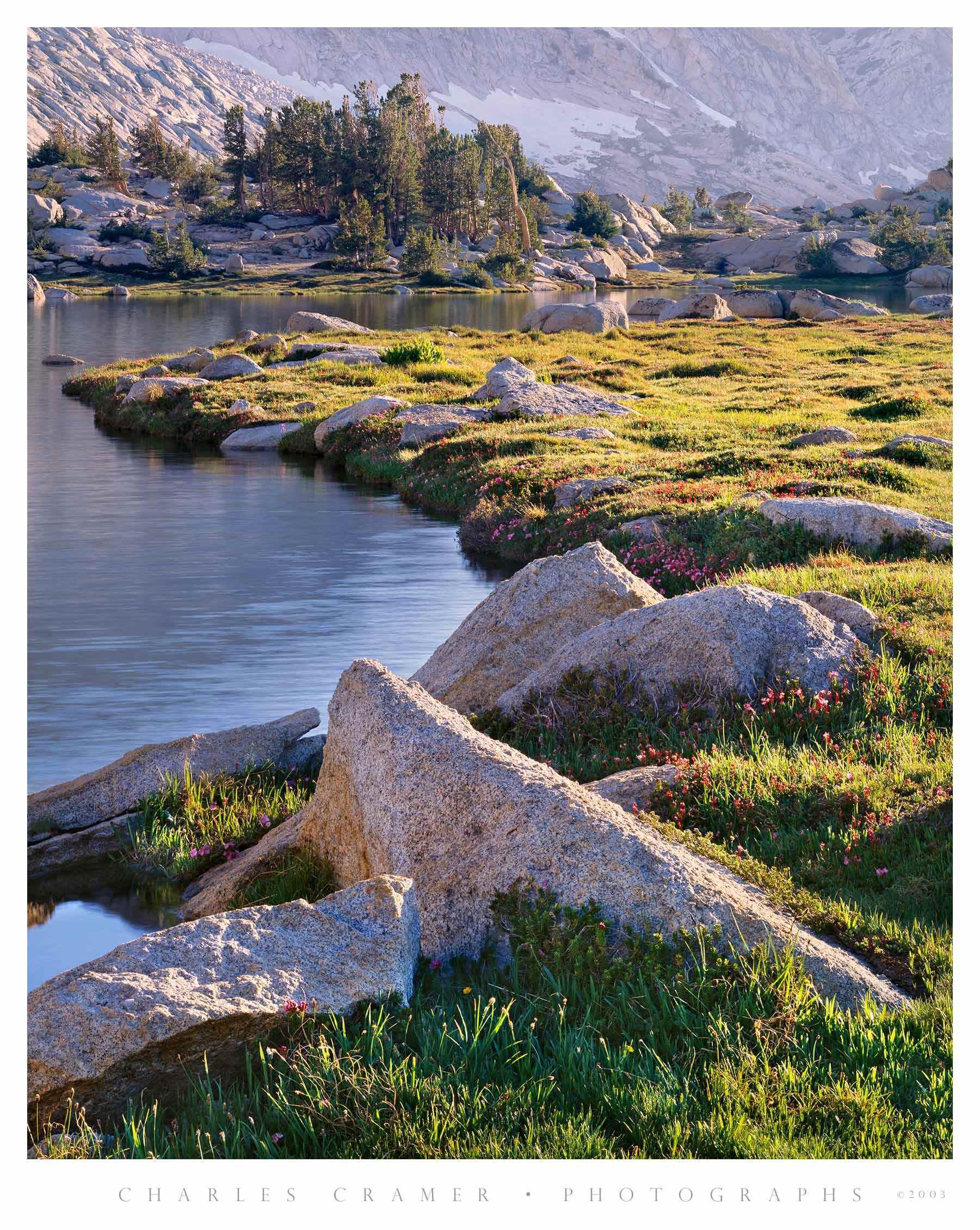 Rocks and Wildflowers, Upper Young Lake, Yosemite