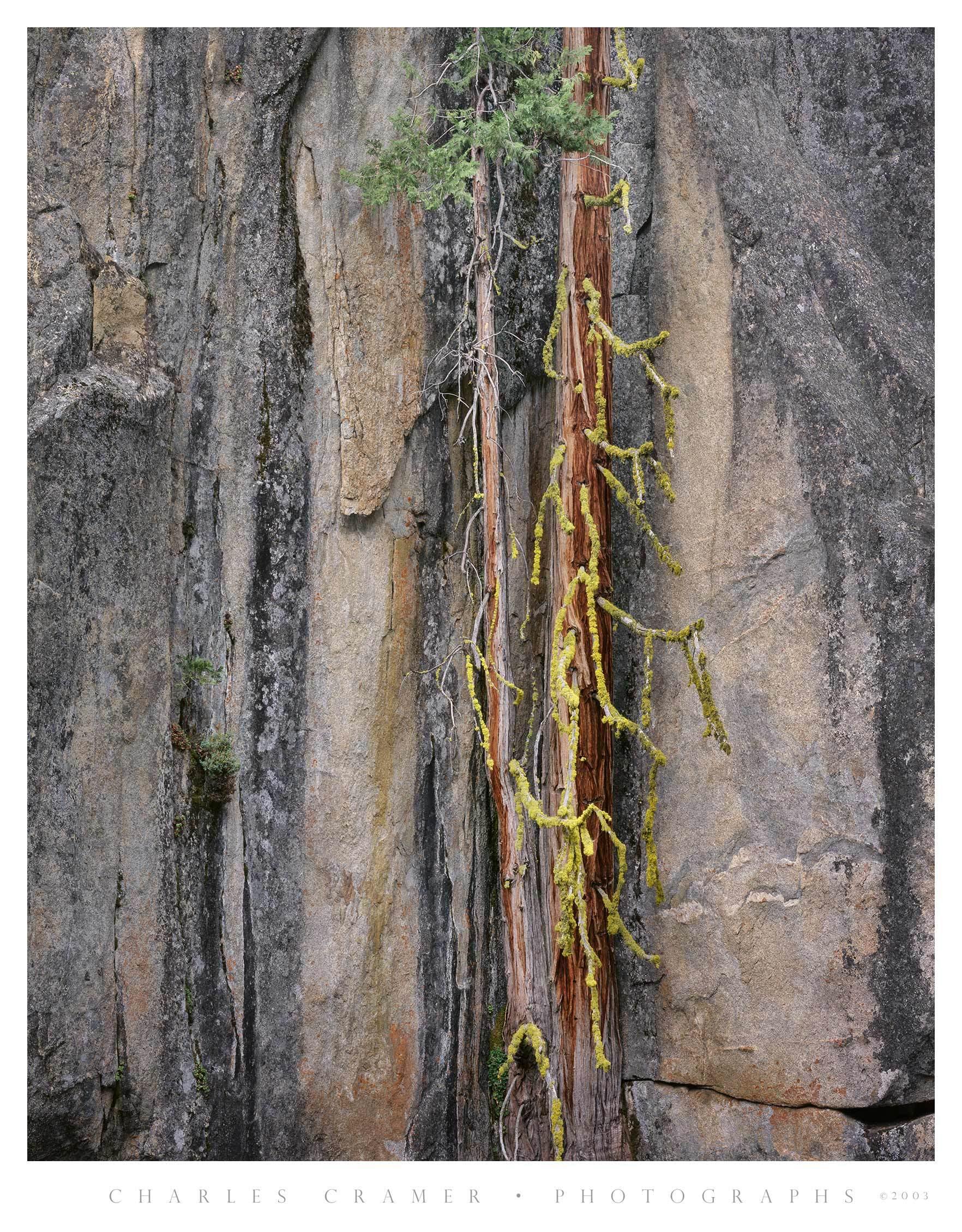 Two Trees, Boulder, near Return Creek, Yosemite