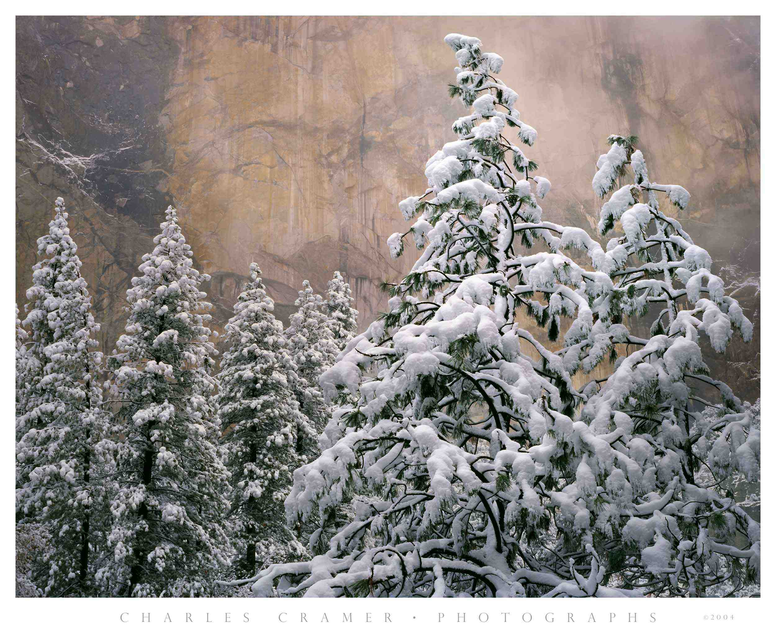 Snow-covered Pines, El Capitain, Yosemite