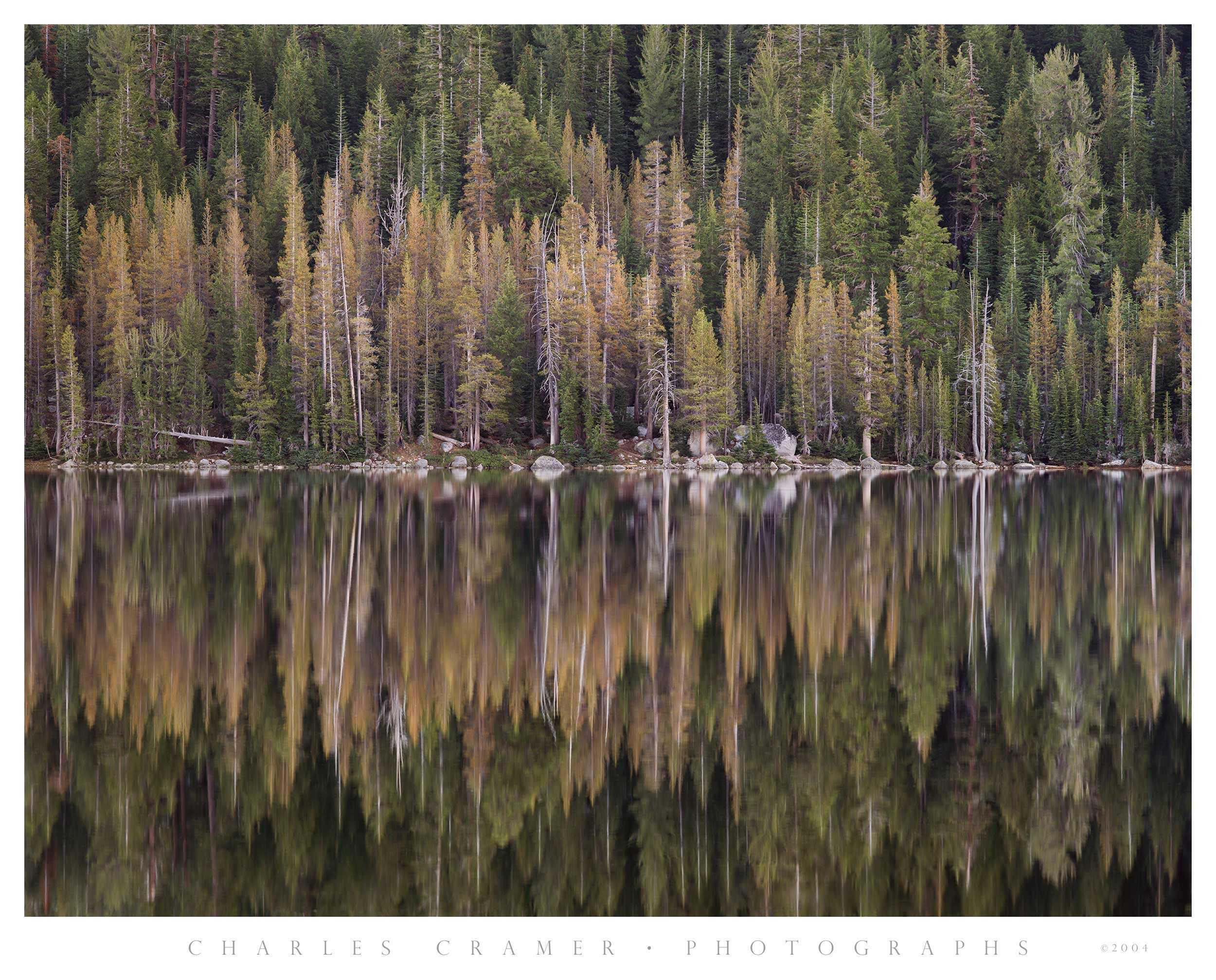 Morning, Tenaya Lake Shoreline, Yosemite