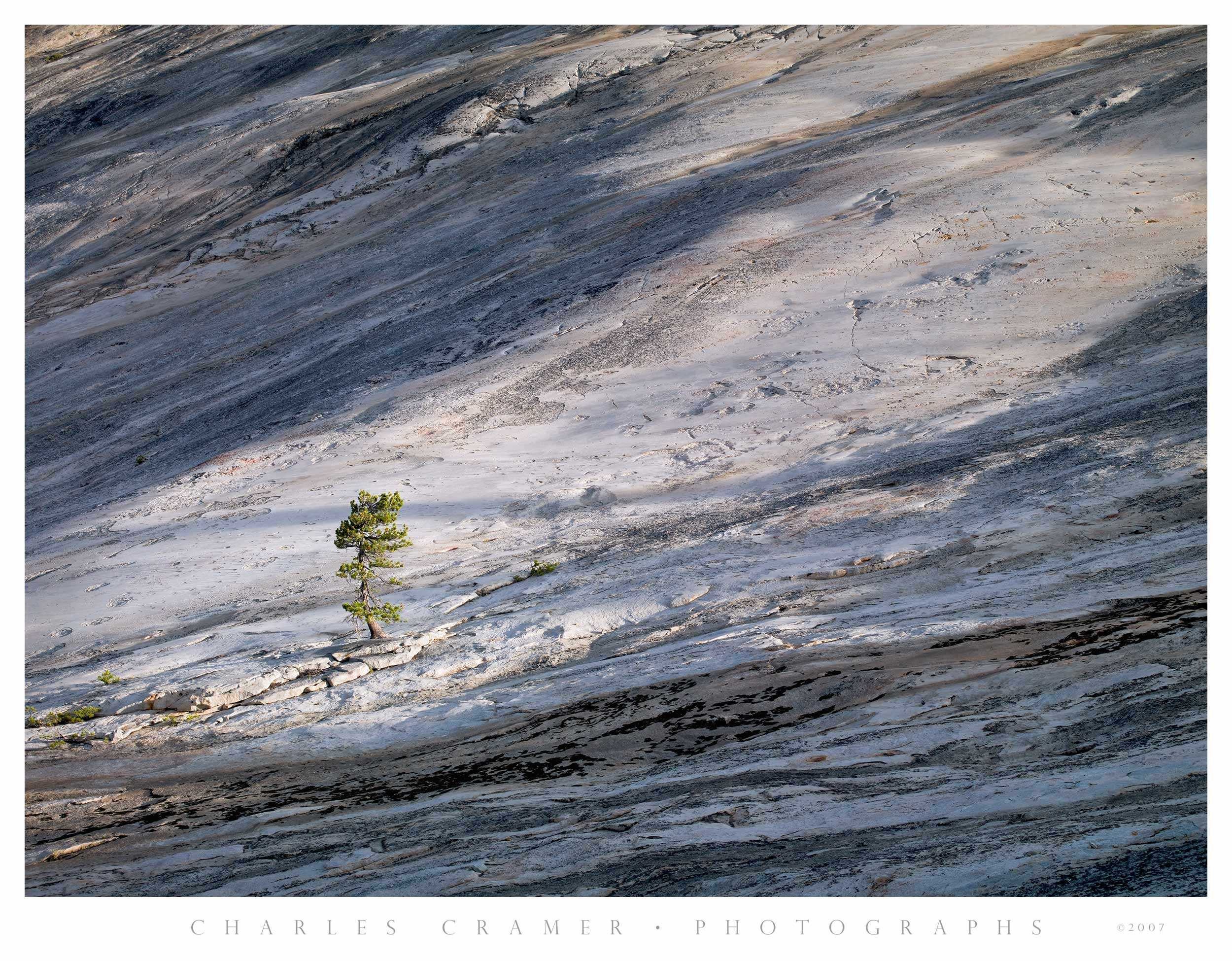 Granite and Pine, Glen Aulin, Yosemite
